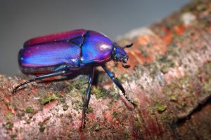 Escarabajo Escarabajo