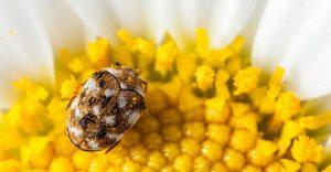 Escarabajos de Alfombra: Datos Interesantes y Cómo Deshacerse de Ellos