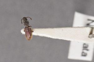 Los 8 Mejores Productos Deshacerse de los Escarabajos de Grano