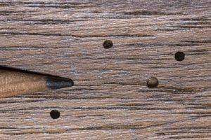 Escarabajo poste en polvo en la madera