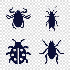 Conjunto de iconos de escarabajo