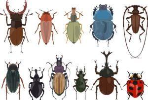 Conjunto de diferentes tipos de bugs e escarabajos