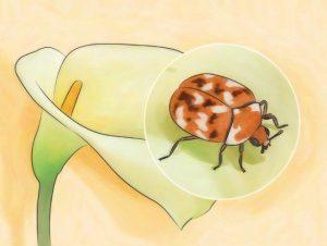 Escarabajos de Alfombras Negras: Datos Interesantes y Cómo Deshacerse de Ellos