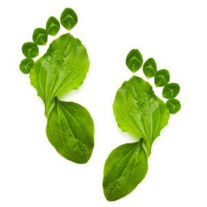Símbolo de ecología verde primavera abstracto para un estilo de vida saludable