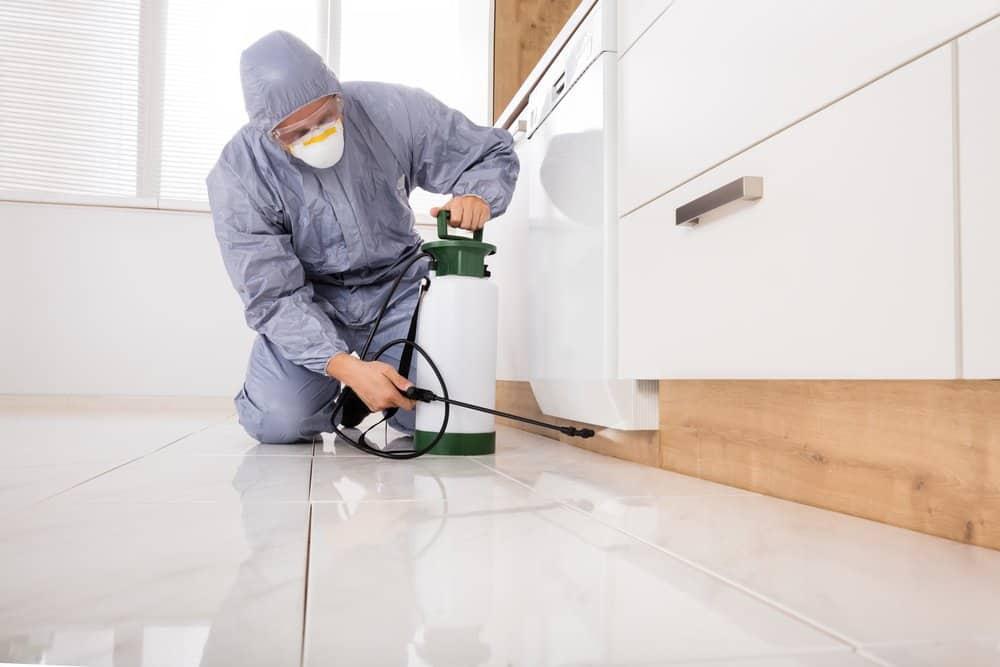 Un exterminador de plagas está limpiando el suelo