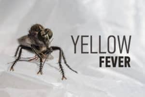 Insecto aterrador y la inscripción: fiebre amarilla.