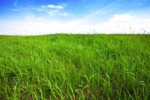 Fondo de hierba verde alto sobre el cielo