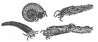 Vida de las Larvas