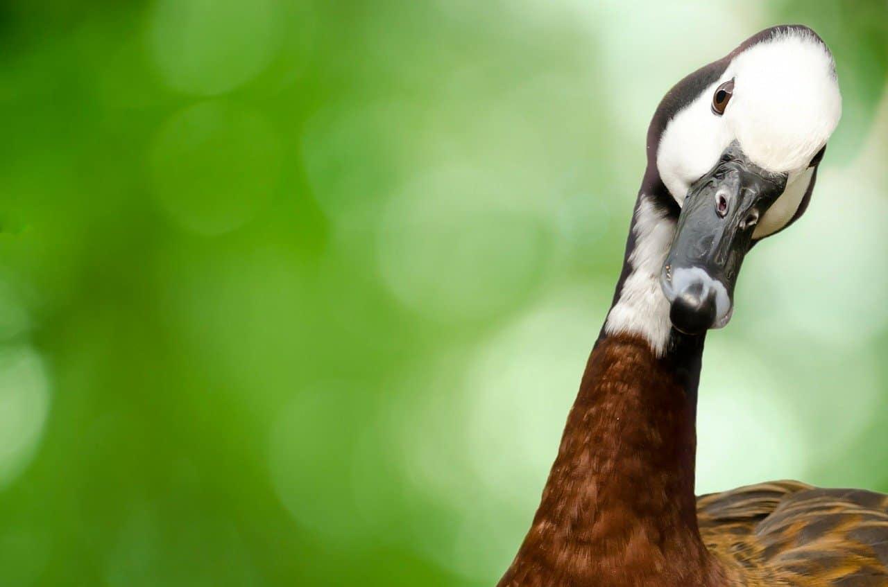 Repelente de Ganso: 9 Reseñas Repelentes más Vendidas