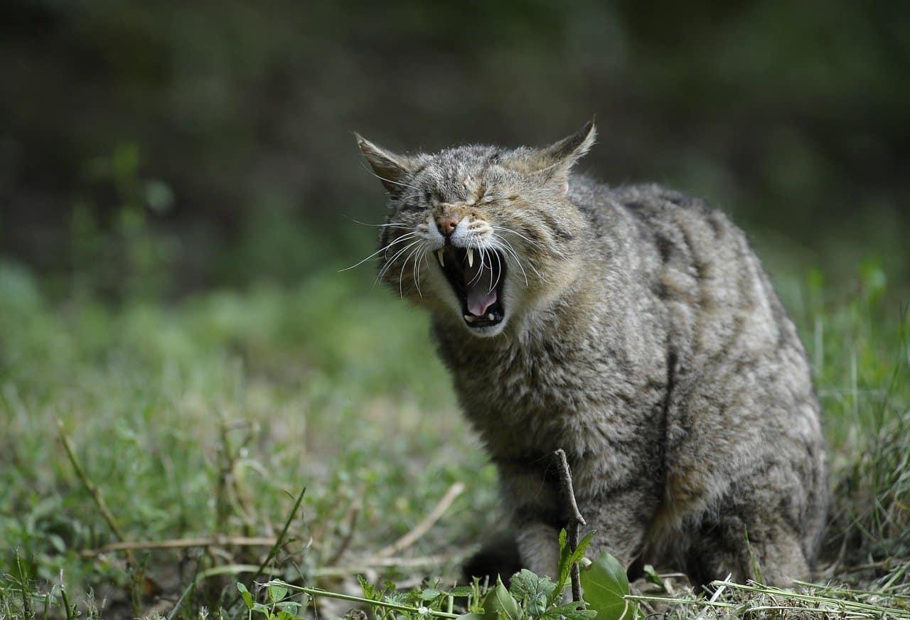 26 Mordeduras más Poderosas en el Reino Animal