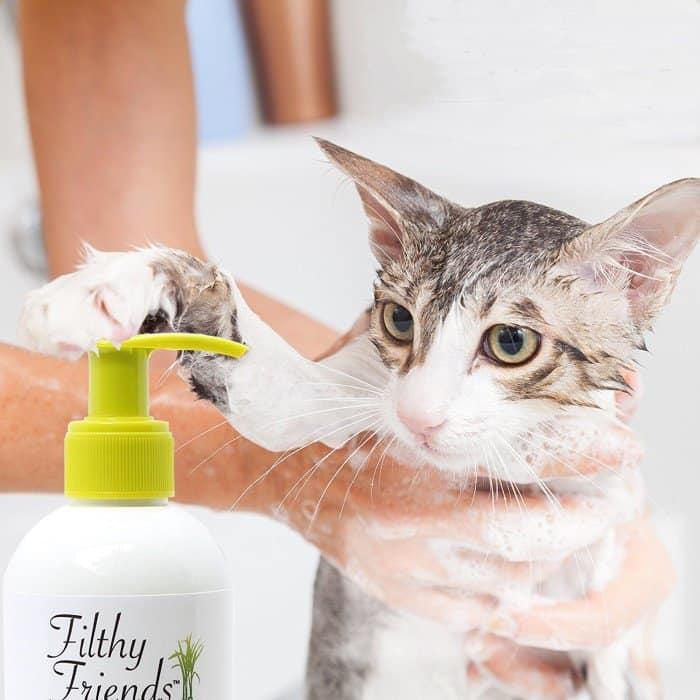 Reseñas de la Mejor Pulga Champú para Gatos