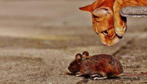 Cómo Mantener a los Ratones Fuera de su Coche
