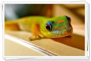 Gecko en la naturaleza