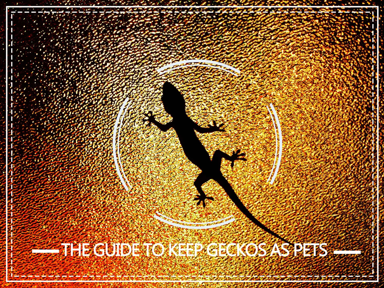 Cuidado de Gecko — La Guía Completa para Mantener Geckos como Mascotas