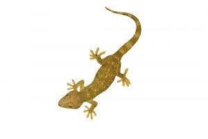 Geckos aislados sobre fondo blanco