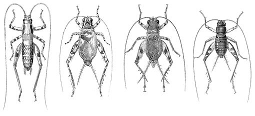 Datos Interesantes Sobre el Insecto Grillo: 10 Respuestas Rápidas, 7 Preguntas y Respuestas