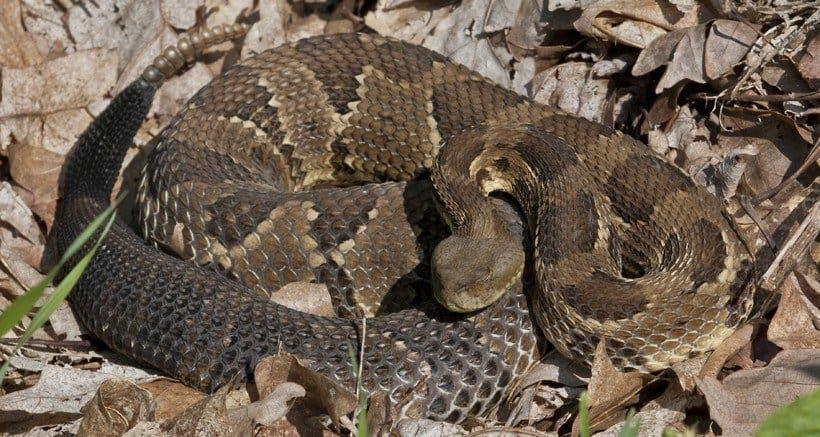 ¿Serpientes Hibernan? 9 Respuestas a una Pregunta Compleja