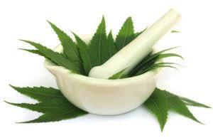 Mortero y una maja con hojas medicinales de neem