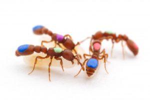 Grupo de hormigas están descansando