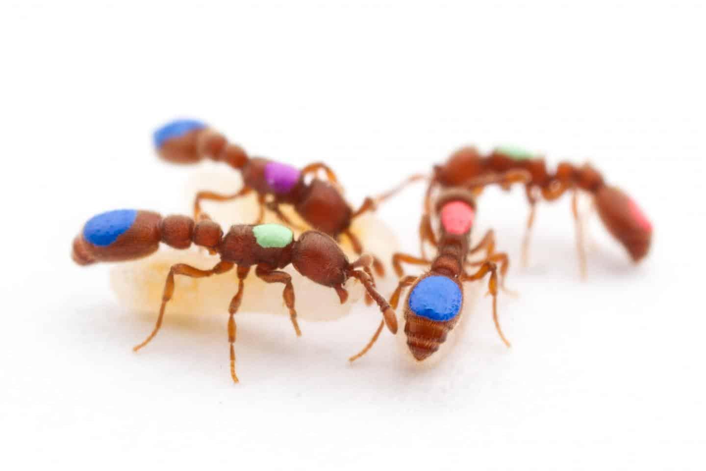 Daño, Detección y Prevención de Hormigas