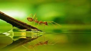 Una hormiga cerca del agua