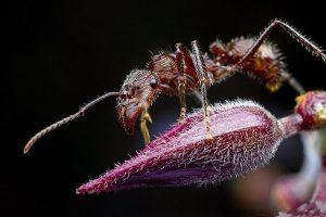 Hormiga Bala: 4 Datos de Enfriamiento de la Columna Vertebral y Cómo Tratar con el Insecto más Doloroso del Mundo