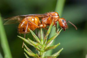 27 Hormigas Hechos que no te Enseñaron en la Escuela