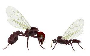 Hormigas voladoras sobre fondo blanco
