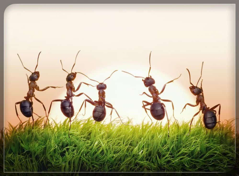 10 Tipos Comunes de Hormigas en el Mundo