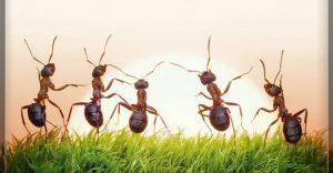 Grupo de hormigas están viendo amanecer