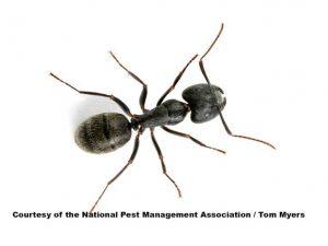 Ttiro de cerca de hormigas carpintero