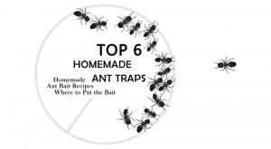 Trampa de hormigas caseras