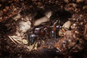 Los huevos de hormiga en la cueva