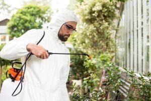 Hombre científico en traje limpio fumigando pesticidas en plantas en invernadero