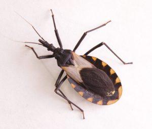 Todo lo que Necesitas Saber sobre las Picaduras de Insectos Asesinos