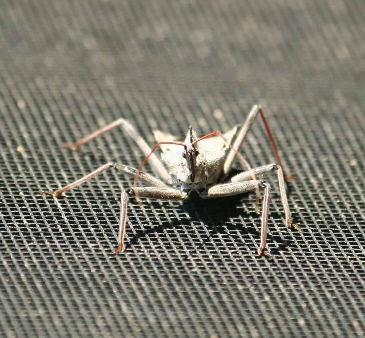 9 Mejores Repelentes de Insectos de Ruedas que Vale la Pena Comprar