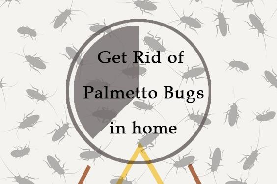 Deshacerse de los Insectos de Palmetto en Casa: 5 Métodos Sencillos (que Funcionan en 2018)