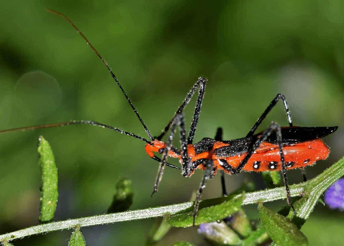 ¿Cómo Controlar los Insectos Asesinos?