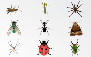 10 Mejores Reseñas de Zapper de Insectos en Interiores