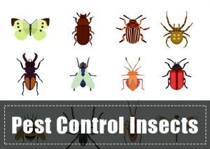 Insectos Beneficiosos: ¿Cómo Utilizar Insectos para el Control de Plagas?
