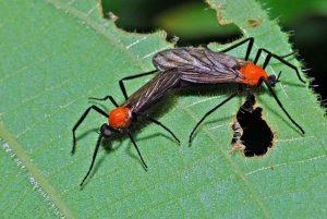Dos insectos de amor tumbados en hoja verde