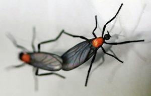 Dos insectos de amor en el fondo blanco