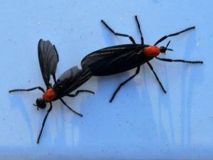 Dos insectos de amor en la pared azul