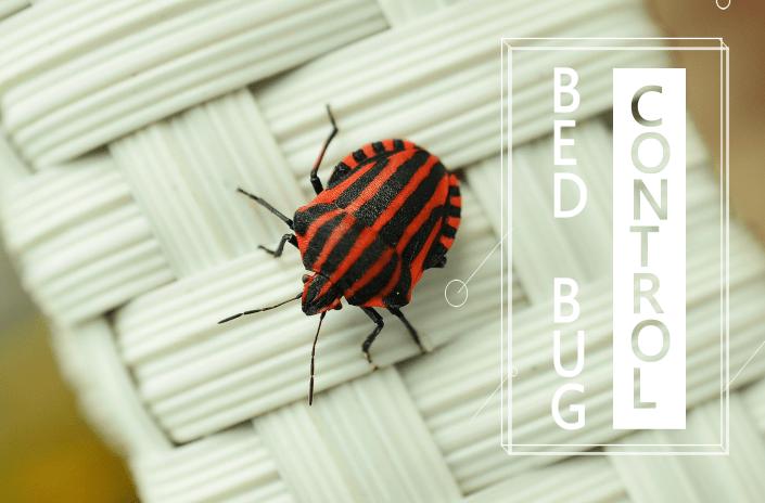 7 Mejores Formas de Controlar los Insectos de las Camas Naturalmente (2018)