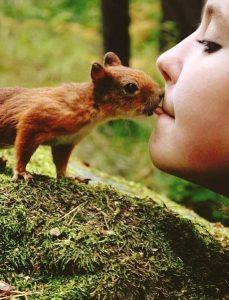 La imagen muestra la interacción entre la ardilla roja y el ser humano.