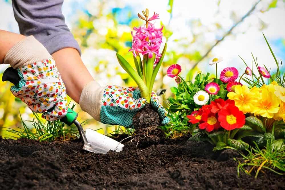 Un hombre está jardinando la tierra