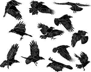 Juego de 12 siluetas de cuervo