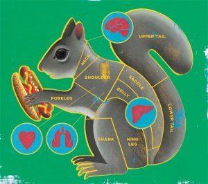 La anatomía de la ardilla gris como alimento.