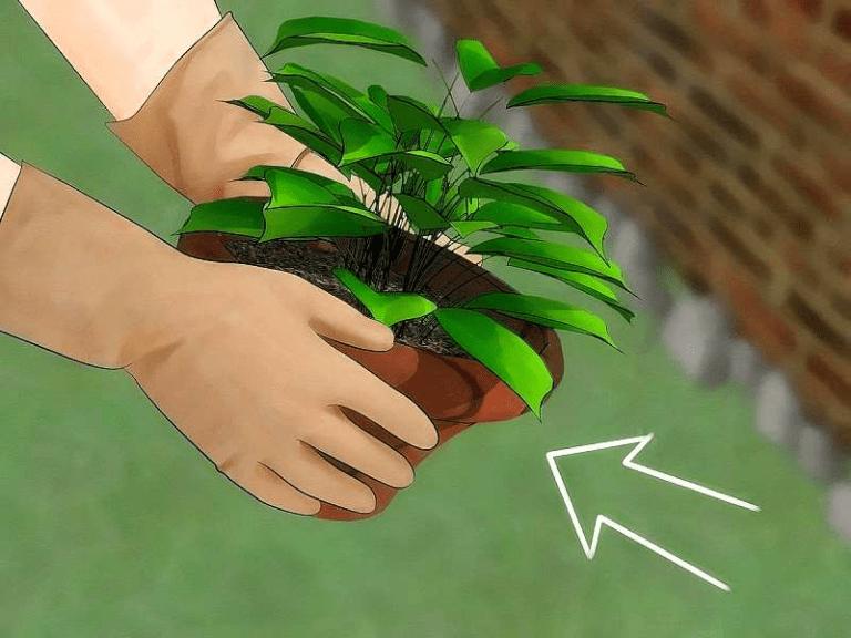 La forma perfecta de deshacerse de las arañas