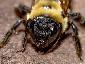 """Pequeños Insectos Negros que Muerden – Diagnosticando Misteriosas """"Mordeduras de Bichos"""""""